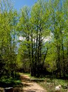 Summer-Trail_GSmith